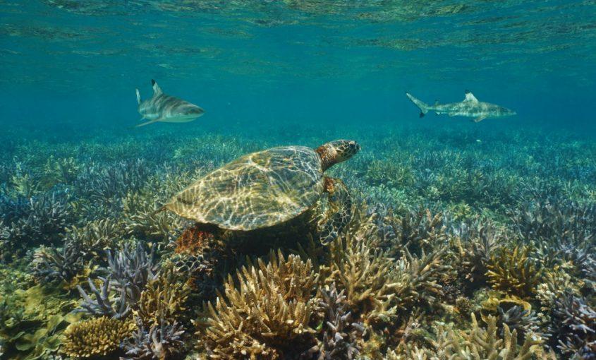 Amazing Marine Animals of the Carolina Coast